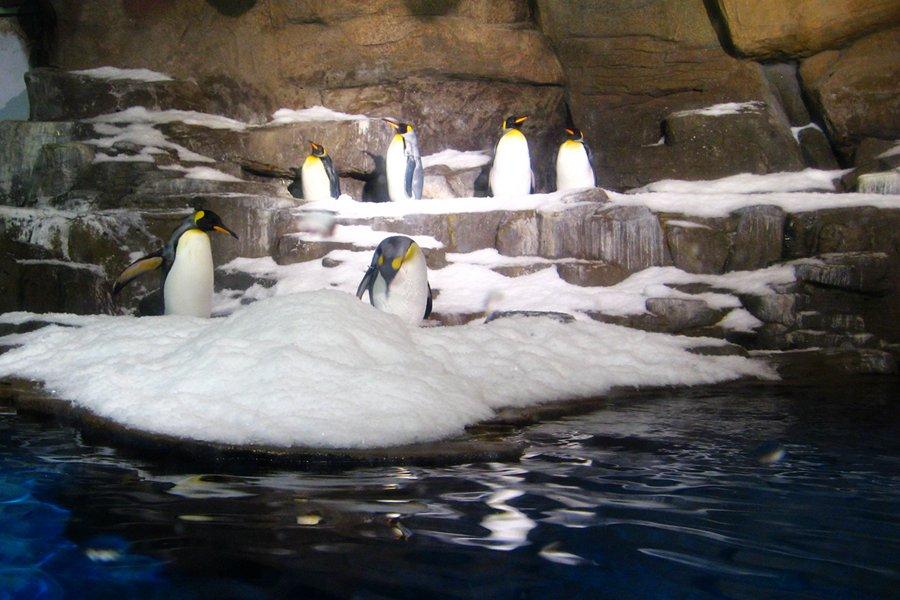 呆萌的企鹅